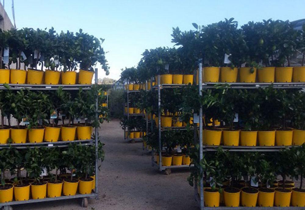 piante su carrello2
